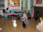 The Animalkind loft and some of its feline residents.