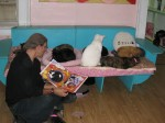 Mario shows A Very Smart Cat to some interested residents at Animalkind.