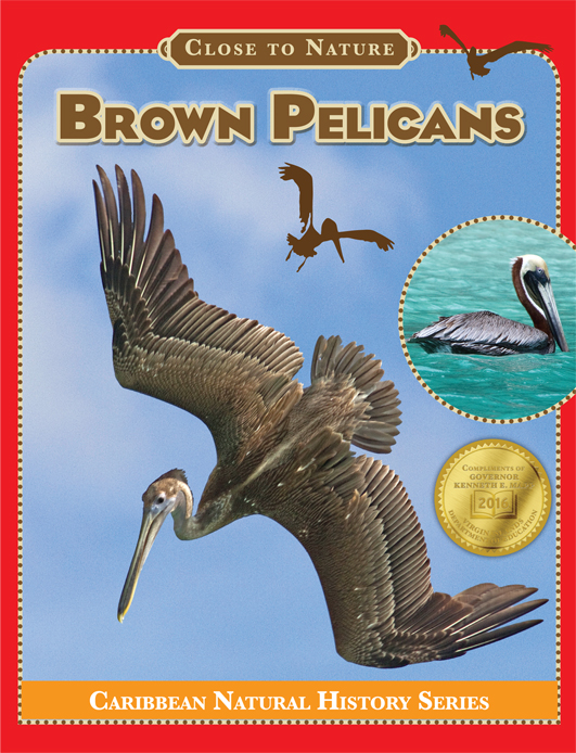 BrownPelicans-Cover-72