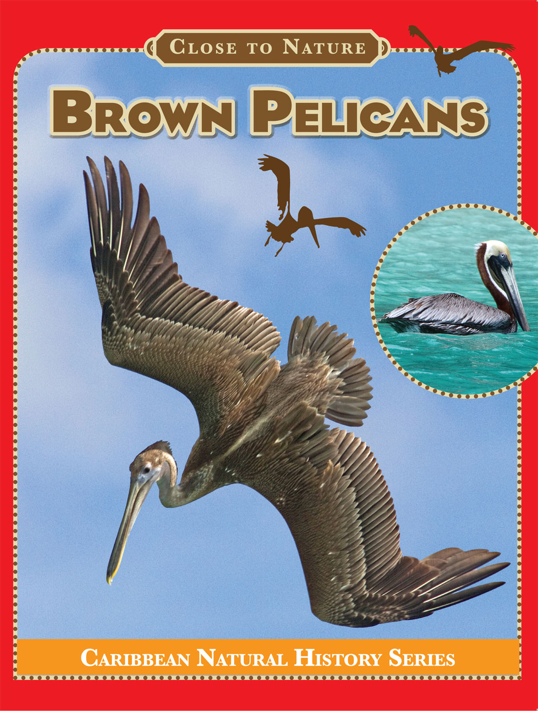 Brown_Pelicans-Cover-web
